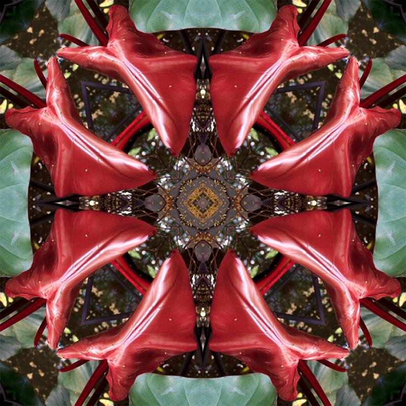 caleidoscopicas-imagem01