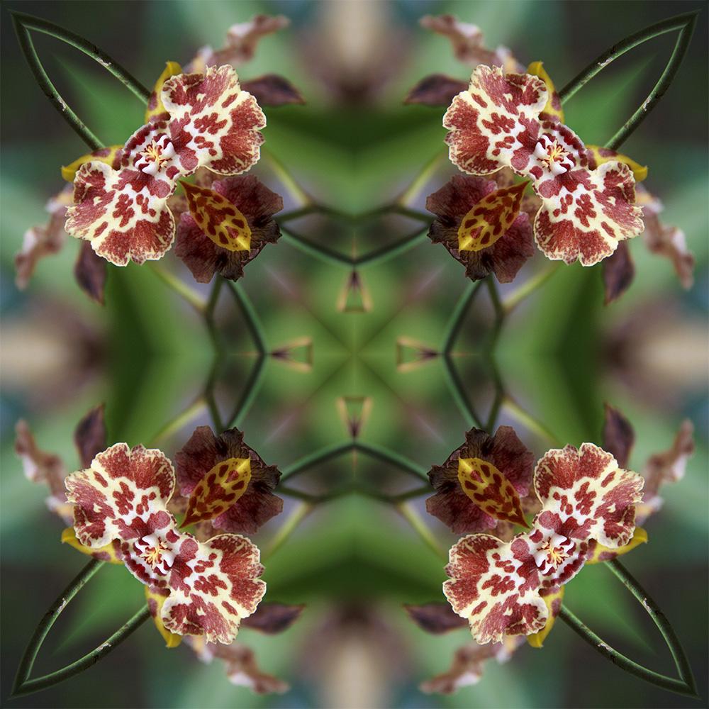 caleidoscopicas-imagem06