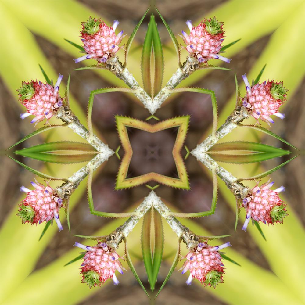 caleidoscopicas-imagem10